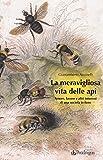 La meravigliosa vita delle api. Amore, lavoro e altri interessi di una società in fiore