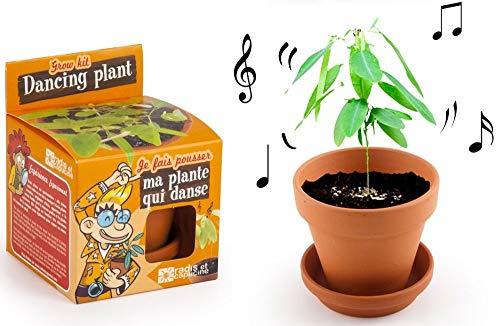 Radis et Capucine Graine de Plante en Pot de Culture pour Enfant Multicolore 5 x 5 x 5 cm