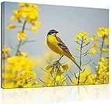 AMDPH Ölgemälde Und Vogelzeichnungen Leinwanddrucke Artwork Artwork Picture Painting Prints On Canvas Für Schlafzimmer Für Wohnzimmer Bürodeko