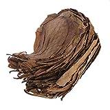 SUCHUANGUANG 50 Piezas de Hojas de catappa Naturales Hoja de Almendra Tratamiento de Limpieza de Peces Tanque de Acuario Bandeja para Hornear marrón