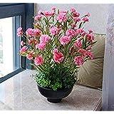 200個ピンクのカーネーションの種花簡単成長HomeFlower