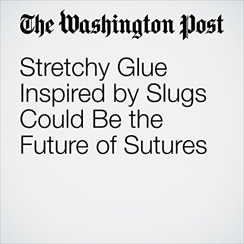 Stretchy Glue Inspired by Slugs Could Be the Future of Sutures copertina