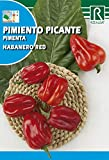 Semilla Pimiento Picante Habanero Red - Rocalba