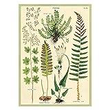 Cavallini Decorative Wrap Poster, Ferns, 20 x 28 inch Italian Archival Paper...