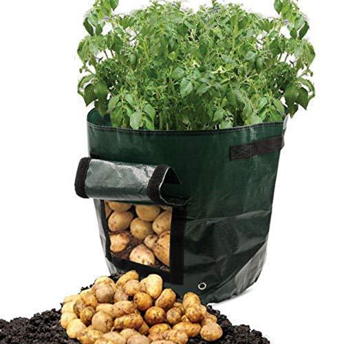 Kartoffel Tomate wachsen Pflanzgefäß,routinfly PE Container Tasche Wurzelpflanze wachsende Topf Seitenfenster (Grün)