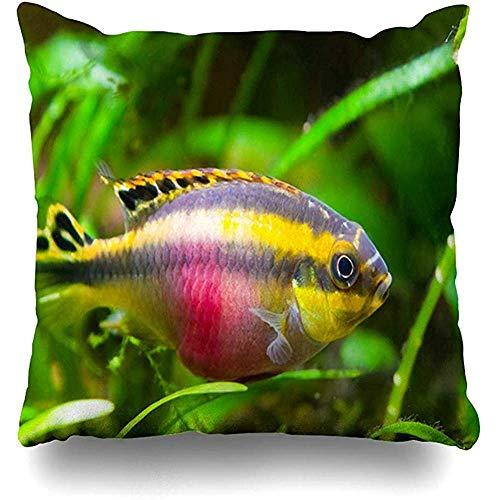 qinzuisp Kussensloop Lippen Afrikaanse Pelvicachromis Pulcher Jonge Zoetwatervis Aquatische Vis Natuur Afrika Aqua Aquarium Ontwerp Thuis Kussen Case Vierkante Grootte es Rits Decor Kussensloop 45X45CM
