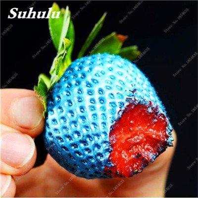 Big Promotion! 1000 Pcs Four Seasons en pot Graines Strawberry Super Sweet Seeds fruits Bonsai plantes Semences Maison et Jardin 19