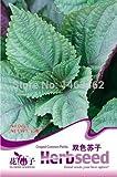 30pcs / bag semillas de perilla, semillas vegetales de plantas bonsai para el hogar y el jardín
