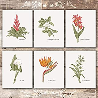 Vintage Botanical Wall Art Prints (Set of 6) - Unframed - 8x10s | Flower Wall Art