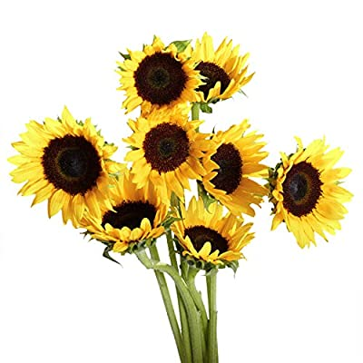 GlobalRose 100 Fresh Cut Yellow Sunflowers - Beautiful Sunbright Blooms by Globalrose