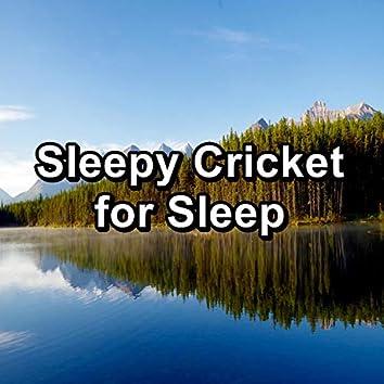 Sleepy Cricket for Sleep