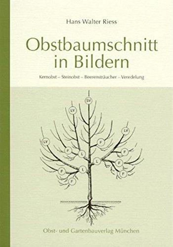 Obstbaumschnitt in Bildern: Kernobst - Steinobst - Beerensträucher - Veredlung