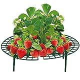 haebelholz 5 Stück Erdbeer Reifer