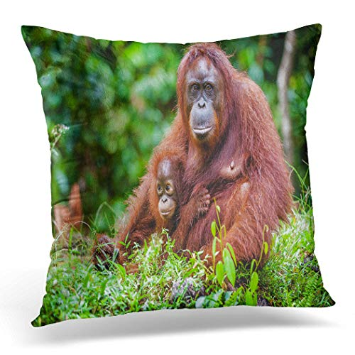 Awowee Cushion Cover 45x45cm/18x18inches Female of the Orangutan Cub in Native Habitat Rainforest Home Decor Throw Pillow Cover Square Pillowcase for Bed Sofa