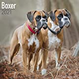 Boxer 2021 Calendar | Square Dog Breed Wall Calendar | 16 Month