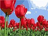 Diamond Painting Kit para Adultos Campo de flor de tulipán rojo Kit de pintura de diamantes 5D,5D diamond painting Usado para artísticos,decoración de la pared,30x40cm(Sin marco)