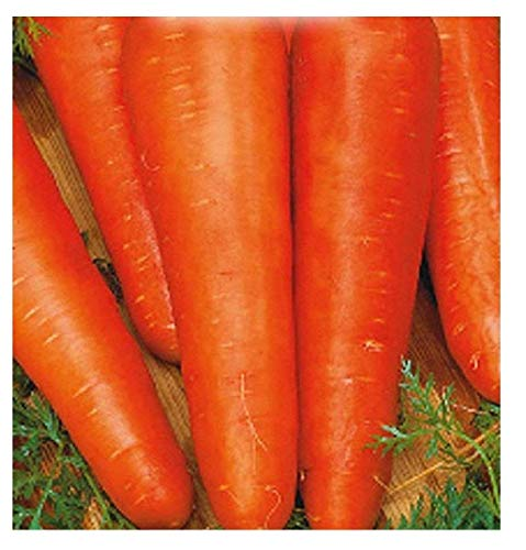 4500 Aprox. - Graines de carotte San valerio - Carotte Daucus en emballage d'origine Made in Italy - Carottes