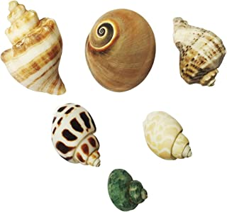 6 Pack Large Shells for Hermit Crabs Different Type Natural Seashells No Painted Hermit Crab Supplies 0.8 to 2 inch Opening Width