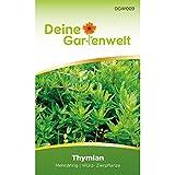 Thymian Samen (Mehrjährig) | Thymiansamen | Saatgut für Thymian-Pflanzen | Kräutersamen
