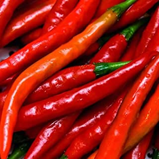 Cayenne Red Long Pepper ► ORGANIC NON-GMO Cayenne Pepper Seeds (100+ Pepper Seeds)◄ by PowerGrow Systems
