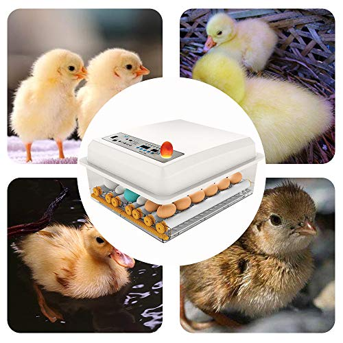 InLoveArts digital Ei-Inkubator 16 Eier Automatischer Brutapparat für den Heimgebrauch, Temperaturregelung und automatisches Drehen für mehrere Eigrößen - 7
