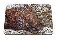 26cmx21cm マウスパッド (ヤマアラシの棘の色は珍しい) パターンカスタムの マウスパッド