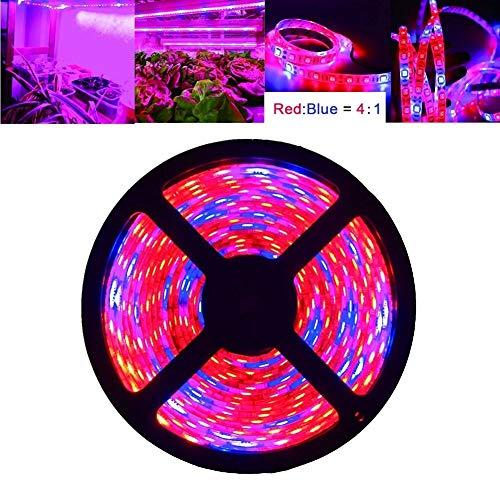 BASDW Luz de crecimiento de plantas LED, luz Tira de luz LED de 5M / 1