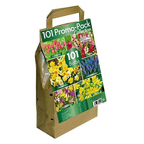 GreenBrokers Big Buy Value Bulb Collection- Pack of 6 Spring Flowering Varieties (Pack of 101) Bee...