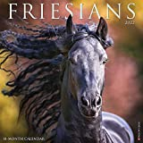 Friesians 2022 Wall Calendar Horses)