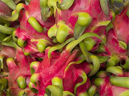Dragon Fruit by Merrill Images/DanitaDelimont Laminated Art Print, 18 x 14 inches
