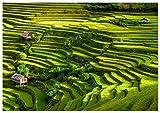 Panorama Póster Arrozales Bali 30 x 21 cm - Impreso en Papel 250gr - Póster Pared - Cuadros Paisajes - Cuadros Zen - Póster Naturaleza - Cuadros Decoración Salón y DormitoRío