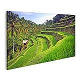 Bild Bilder auf Leinwand Terrasse Reisfelder Ubud