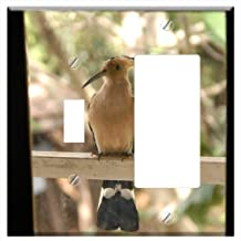 1-Toggle 1-Rocker/GFCI Combination Wall Plate Cover - Bird Hoopoe Madagascar Endemic Africa Animal