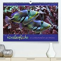Korallenfische im Lichtschimmer des Meeres (Premium, hochwertiger DIN A2 Wandkalender 2022, Kunstdruck in Hochglanz): Bunte Korallenfische - Tierportraets in emotionalem Licht fotografiert. (Monatskalender, 14 Seiten )