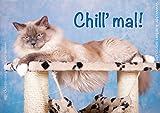 'Divertenti Doppia vibrazione con buste, biglietti d' auguri, auguri Chill' MAL, con gatto birmano im Tiragraffi in set da pezzi
