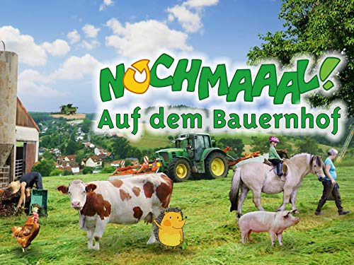 Im Stall und auf der Weide - Kühe auf der Weide