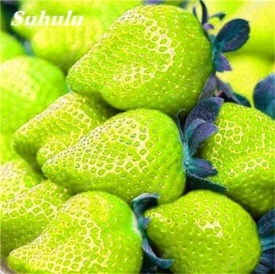 Big Promotion! 1000 Pcs Four Seasons en pot Graines Strawberry Super Sweet Seeds fruits Bonsai plantes Semences Maison et Jardin 18
