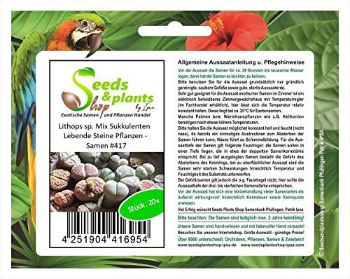 Stk - 20x Lithops sp. Mix Sukkulenten Lebende Steine Pflanzen - Samen #417 - Seeds Plants Shop Samenbank Pfullingen Patrik Ipsa