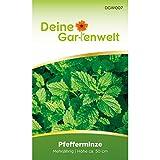 Pfefferminze Samen (Mehrjährig) | Pfefferminzsamen | Saatgut für Pfefferminze-Pflanzen | Kräutersamen | Pfefferminzesamen