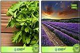 Tipo di semi: herb Adatto: indoor, outdoor Sementi delle piante organic Semi genuini e vitali Siamo venditori autorizzati per pinkdose.