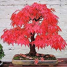 ASTONISH SEEDS: A7: 8 clases Semillas Semillas Bonsai Tree raras plantas de maceta Juego para el jardín de DIY semillas japonesas 10 PCS/Clases