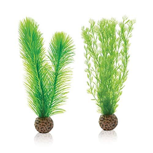 biOrb Gemakkelijk Plant Varen