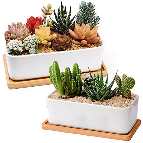 Hamiledyi Ceramic Succulent Planter 2 Pcs Simple Style Cylinder Plant Pot White 6.4Inch Pots Planting Flower Cactu Bonsai with Bamboo Tray(Plants Not Included)