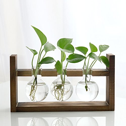Ivolador Desktop Glass Planter Bulb Vase with Retro Solid Wooden Stand for Hydroponics Plants Home Garden Wedding Decor (3 Bulb Vase)…