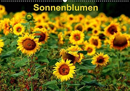 Sonnenblumen (Wandkalender 2021 DIN A2 quer)