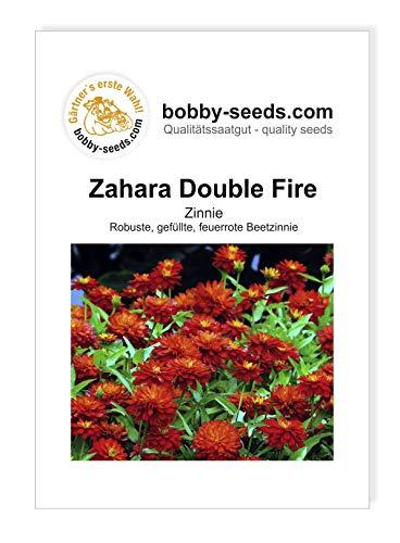 Zahara Double Fire Zinnie von Bobby-Seeds Portion