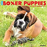 Just Boxer Puppies 2021 Calendar