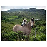 16x20' Two Horses Nuzzling in The Country Side Paint by Numbers Kits for Adults Kids DIY Wall Art Picture Framed Canvas Oil Painting Set Digital Paintworks for Beginners
