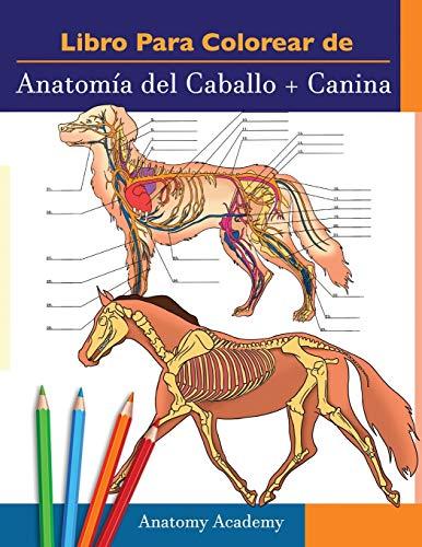 Livro para pintar de Anatomia do Cavalo + Canina: Compilação 2 em 1 | Livreto a cores de auto-avaliação muito detalhado para estudar Anatomia Equina e ... amantes de los animales y adultos