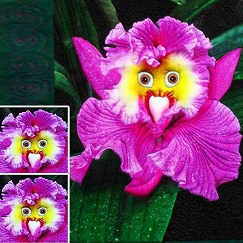 100 Pz Pappagallo Foro Viso Semi Di Orchidea Pianta Profumata Home Office Giardino Decorazione Bonsai Semi di orchidea 100 pz